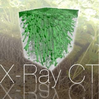 <b>X-ray影像</b> X-Ray CT 應用於地質以及植物研究
